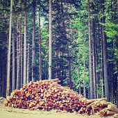 image of firewood  - Sawed Firewood Dropped in the Forest Retro Effect - JPG