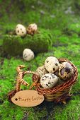 pic of grass bird  - Bird eggs in decorative basket on green grass background - JPG
