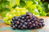 Постер, плакат: Healthy Fruits Red And White Wine Grapes In The Vineyard Dark Grapes Blue Grapeswine Grapes Bun