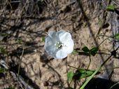 Riverbank Wildflower