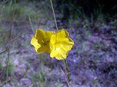 Yellow Flower Duo