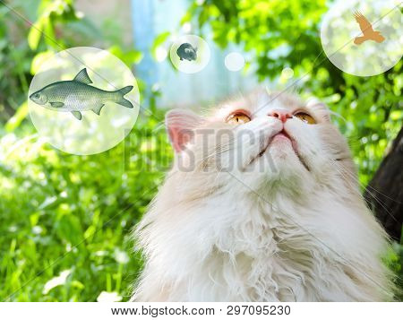 poster of Cat, Probably Thinking About Food, With A Think Cloud Against A Green Background. Dreaming Cat.  Top
