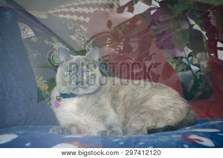 poster of Cat Through Window With Outside Reflection.  Cat On Favorite Blanket Gazing Outside.  Cat Wishing Sh