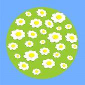 Margarita rueda flores en globo
