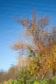 Abstract Background: Reflection Of The Autumn Park In The Pond. Blue Sky And Yellow Trees Reflecting poster