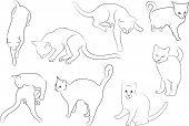 contorno de gatinhos gatos