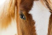 Reflections In The Eyes Of A Horse, View Of A Red Horse, View Of A Horse poster