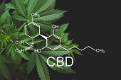 Cbd Formula. Medical Marijuana, Cbd And Thc Elements In Cannabis, Hemp Industry, Cannabinoids And He poster