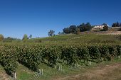 Vineyards In Saint Emilion