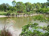 Japanese garden by lake