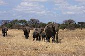 Elephant Family Tarangire National Park Tanzania