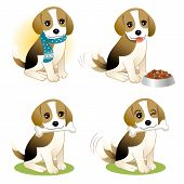 Set Of Beagle Puppy