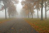 Cursos de outono
