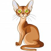Vector Color Sketch Of The Red Cat Abyssinian Breed