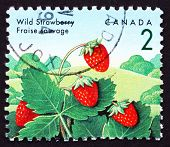 Postage stamp Canada 1992 Wild Strawberry, Fragaria Vesca Plant,