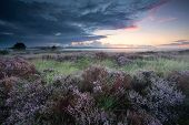 picture of marshes  - marshes with pink flowering heather at sunrise - JPG