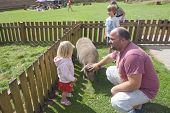 petting zoo or farm with family playing with a pig and chickens