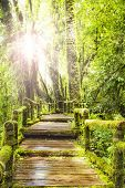 Moss Around The Wooden Walkway In Rain Forest
