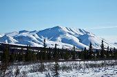 picture of denali national park  - Snow coats Alaska - JPG