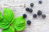 Rich Blackberry And Green Leaf
