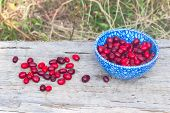 Blue Plate With Cornelian Cherries