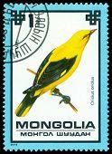Vintage  Postage Stamp. Golden Oriole.