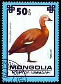 Vintage  Postage Stamp. Ruddy Shelduck.