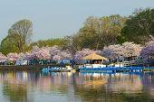 Cherry Blossom Festival in Tidal Basin - Washington DC - United States