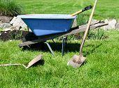 Blue wheelbarrow and gardening tools on green lawn