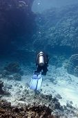 coral reef with hard corals and diver at the bottom of tropical sea