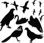 birds vector isolated