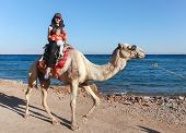 DAHAB, EGYPT - JANUARY 30, 2011: Female tourist with kid rides a  camel on beach during safari. Loca