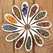 Medicinal herb selection also used in witches magical potions in white porcelain bowls over oak wood background.