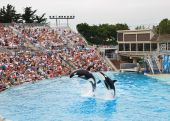 SeaWorld In