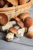 The raw boletus edulis as a background