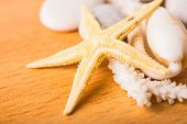 Starfish, White Coral, Shell On Wood Background