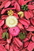 Floral Background Of Colourful Potpourri