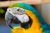 Parrot Macaw samut prakan crocodile farm & zoo thailand