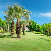 Tropical Palm Trees In A Beautiful Park