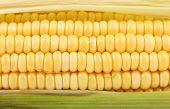Background of corncob. Close up.