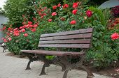 Bench In The Garden Next To The Beautiful Shrub Roses