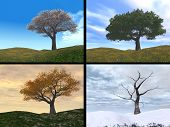 stock photo of winter season  - Four seasons cherry tree on a hill represents spring - JPG