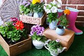 Flowers in  decorative pots and garden tools on green grass, on bricks background