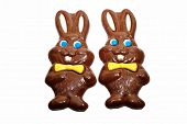 Two Chocolate Easter Bunnies Over White