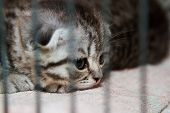Kitten In A Cage - Stock Image