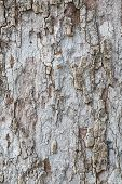 Tree Bark Texture And Background
