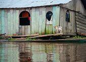 Belen Dogs