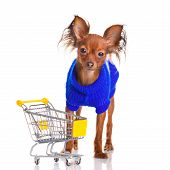 Toy Terrier With Shopping Cart