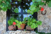 Window And Plants