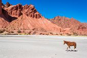 pic of colt  - Brown and white colt in a desert surrounded by dramatic red hills in Tupiza Bolivia - JPG
